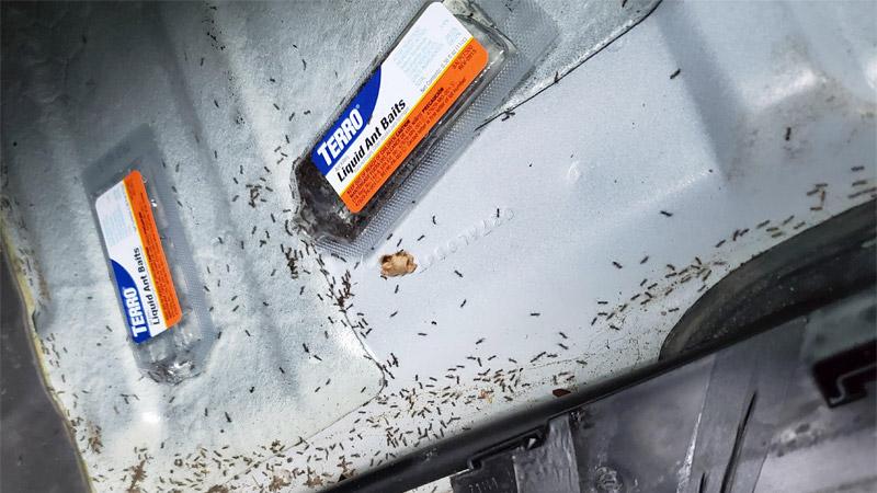 best ant killer for car